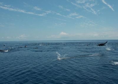 Dolphins_tucanterra