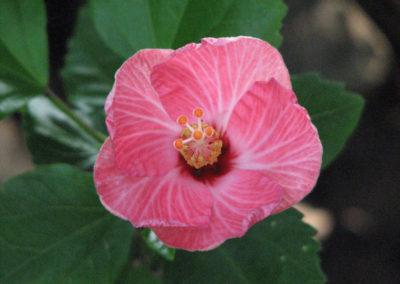 Garden_tucan