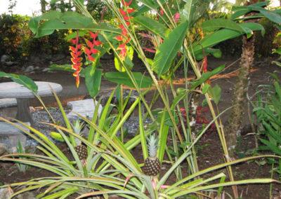 Gardens_tucanterra