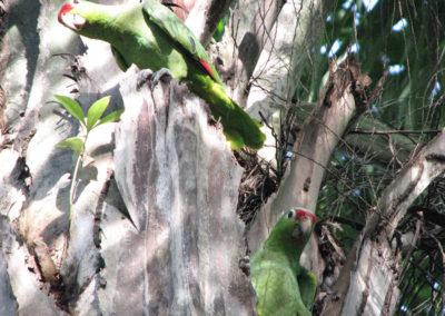 Widlife_parrots
