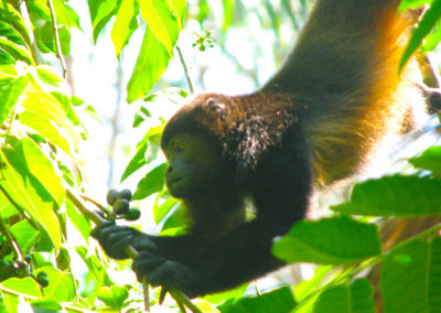 Wildlife_Monkey_