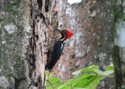 Wildlife_woodpecker