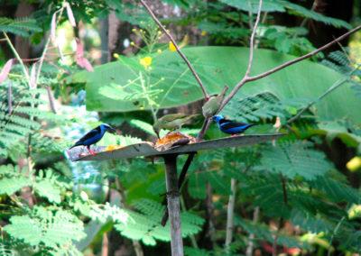 birds_tucanterra